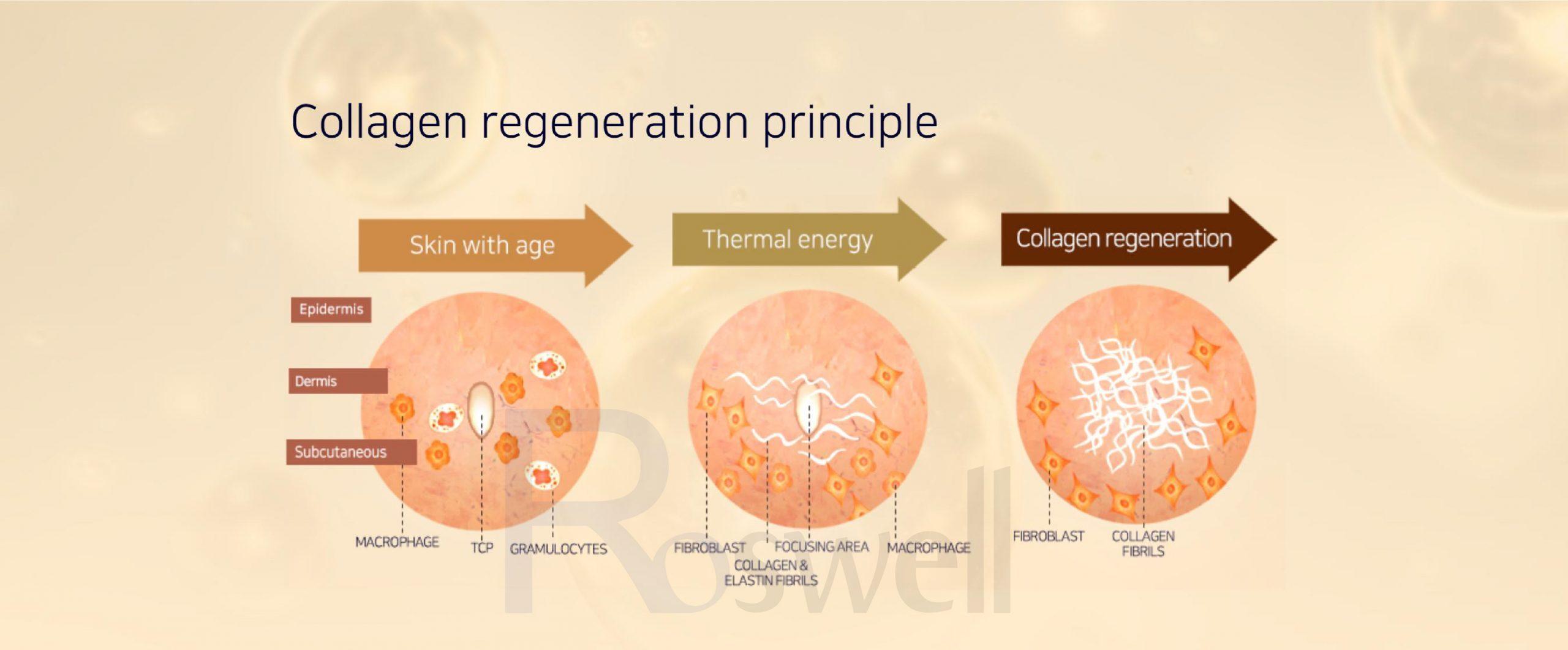 Qúa trình phục hồi collagen dươi